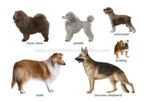dog-breeds_1